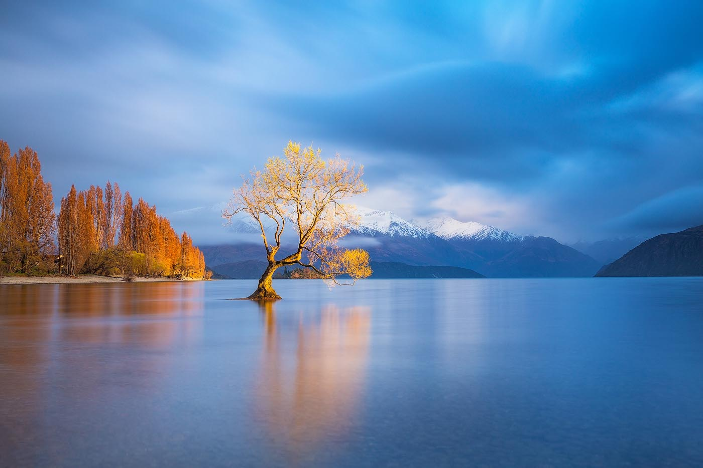 Golden Wanaka Tree Daniel Tran Photography
