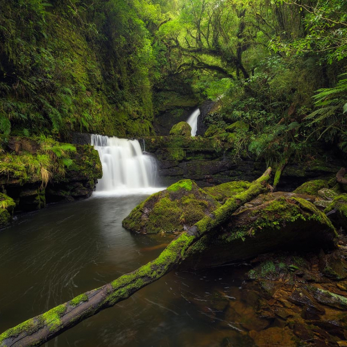 Lower McLean Falls Catlins Forest Park