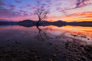 Wanaka Tree New Zealand