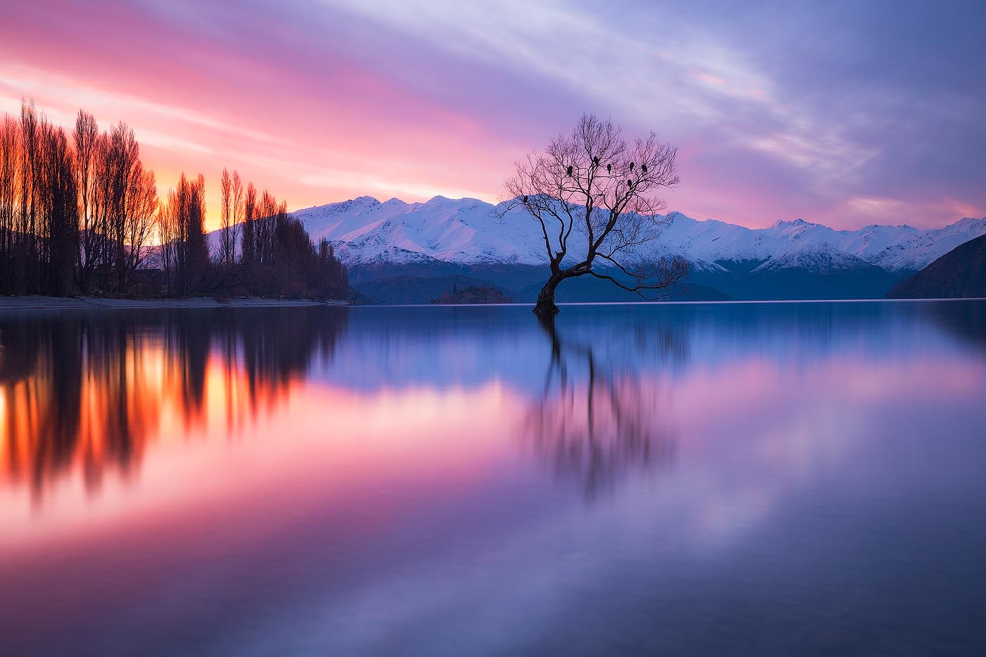 Wanaka Tree Daniel Tran Photography